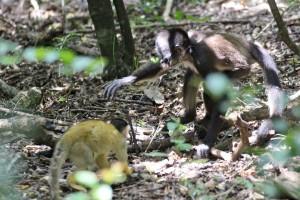 Het dierenpark vangt onder andere apen op