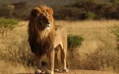 Ga mee met 4exchange naar het Kruger Park!